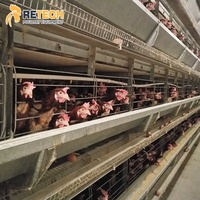 Good Price Egg Layer Chicken Farming Equipment Fully Automatic Battery Cages Laying Hens
