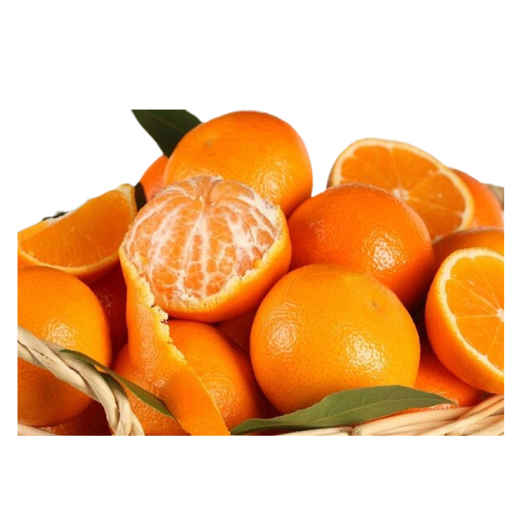 High Quality Fresh <strong>Orange</strong> Mandarin <strong>Orange</strong> Fresh <strong>Oranges</strong> For Sale