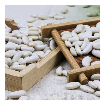 Golden Vast Field White Kidney Beans Dried Bulk Bean Wholesale Price