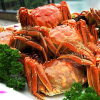 Crab flavor seasoning for meat seasoning for marinated meat high concentrated flavour seasoning