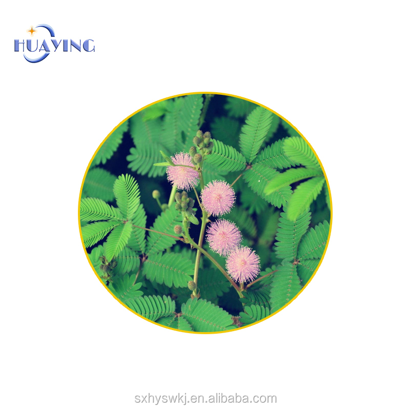 Factory Supply mimosa hostilis root bark extract mimosa pudica plant extract powder 10:1