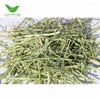 T&H American Top Quality Alfalfa Hay for Animal Feed Cattle Horse Chicken Pets