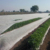 landscape fabric ppsb agricultural nonwoven fabric