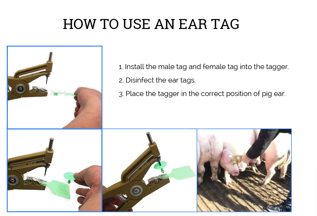 ear-tag-text-page_03.jpg