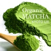 Japanese Matcha Green Tea Powder Wholesale
