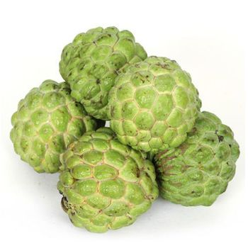 Fresh Custard Apple Fruit  (WhatsApp +84376540581)
