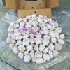 /product-detail/wholesale-purple-white-fresh-natural-garlic-62004603268.html