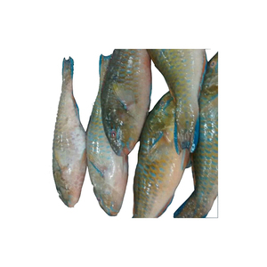 Best Seller of Cheap Whole Frozen Parrot Fish Seafood