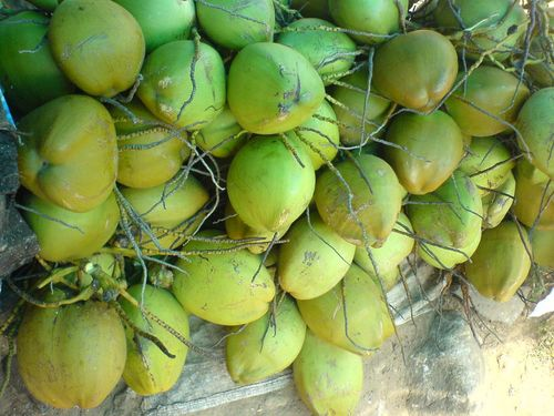 Tender Coconut/Fresh Young Coconut