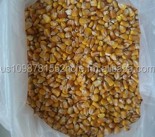 NON GMO Yellow Corn