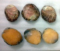 Red Abalone (Live, Frozen & Canned)