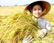 MEDIUM ROUND RICE - CHEAPEST PRICE AND HIGH QUALITY