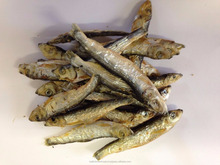 Dried Sprats, Dried Anchovy fish, Frozen, salted