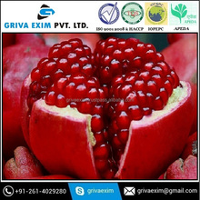 Export Egyption Farm Fresh Pomegranate