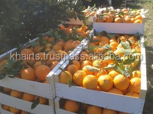 2016 Sweet Fresh mandarin orange/Fresh Orange, Naval Orange, Valencia Oranges