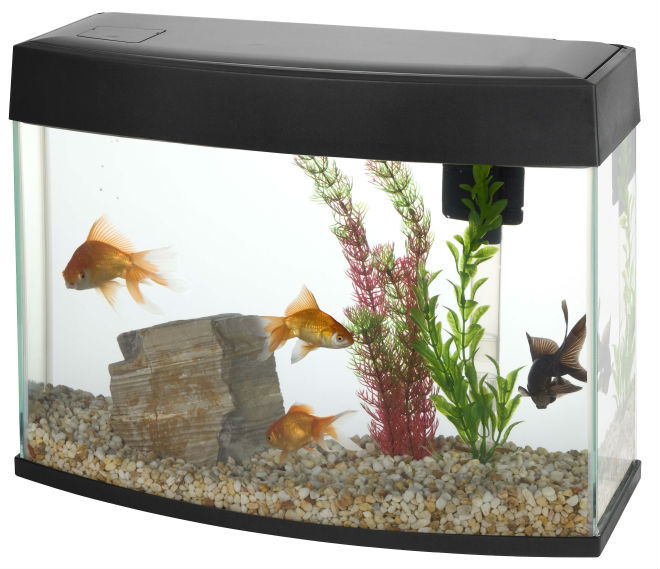 Pano Desktop Aquariums