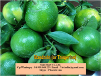 FRESH GREEN ORANGCE FRUIT