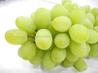 Fresh Grapes , Fresh Green Seedless grape , bulk grapes