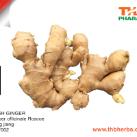 Fresh Super Ginger From Vietnam With