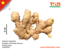 Fresh Super Ginger from Vietnam with best rice new crop