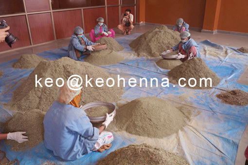 Trading of Best Selling Products Indigo Black Natural Henna Powder