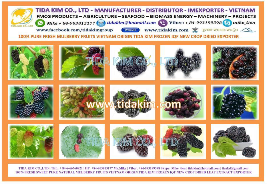 100% PURE FRESH MULBERRY FRUITS VIETNAM FROZEN DRIED TIDA KIM ORIGIN IQF NATURAL USED PRODUCTION