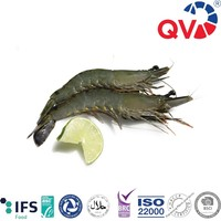 Frozen Raw Black Tiger Prawn Shrimp With HOSO