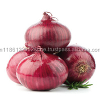 Fresh Onions Export Quality