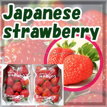 sweet and Best-selling strawberry price FRESH FRUIT for fruit importer