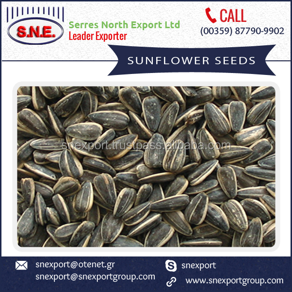 Sunflower Seeds for Human Consumption Available at Economical Price