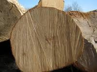 Best Quality Pine wood logs