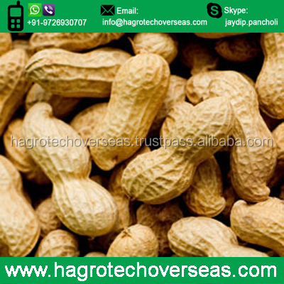 Raw Peanuts in Shell/Groundnuts in Shell for sell