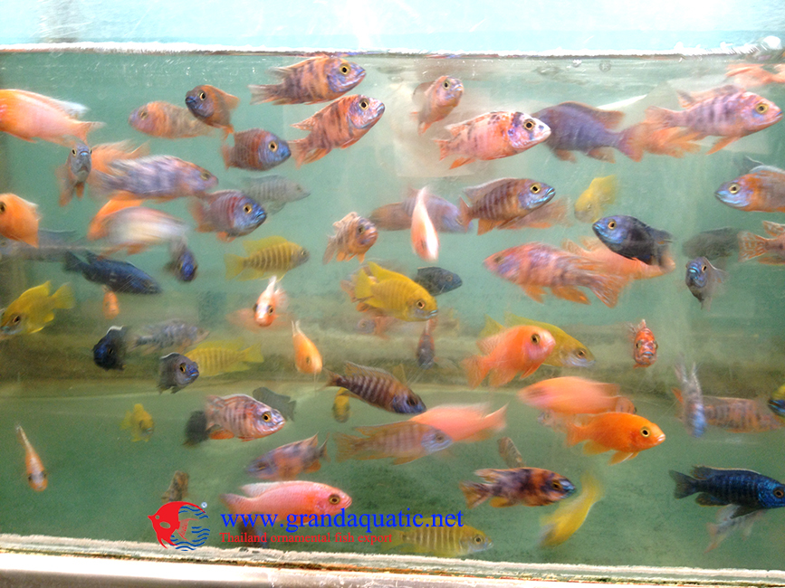 Freshwater fish for sale buy freshwater fish for sale for Freshwater fish for sale