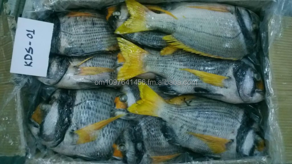 Frozen fish - Double Bar Seabream from Oman Middle East