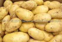 2016 Hot Sales Farm Fresh Potato