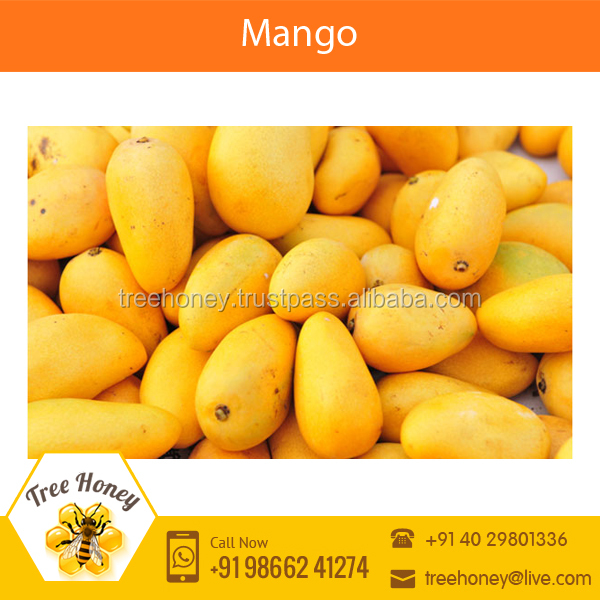 Highly Demanded Fresh Indian Mango Available at Low Market Price