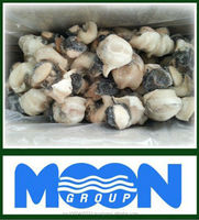 frozen conch meat for sale