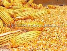 Animal Feed for Chicken Cattle.Goat Pigs Bird, Corn Gluten Meal, Soybean Meal ,Poultry Feed Additive