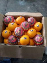 Valencia orange from Egypt