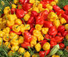 /product-detail/fresh-green-peppers-fresh-red-and-yellow-pepper-50030798712.html