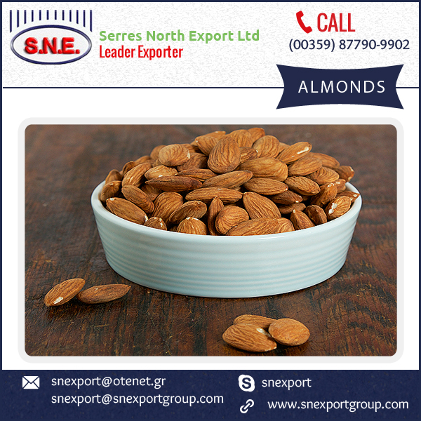 Best Selling Organic Grade Almonds at Wholesale Price for Bulk Buyer