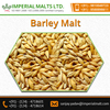 Standard Quality Feed Barley for Sale Multiple Health Benefits
