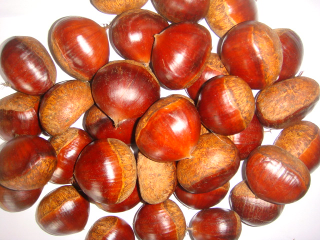 Taian Fresh Raw Chestnut Price Per Kg