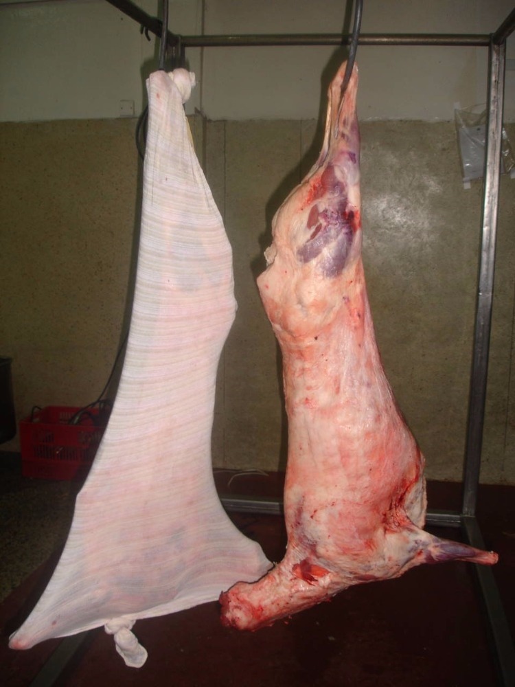 Frozen whole lamb carcass/ sheep meat