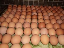 wholesale egg prices Fresh white and brown chicken eggs from Thailand//+66 986270863/whatsapp