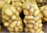 200-300g Fresh farm potato Premium Quality Potato