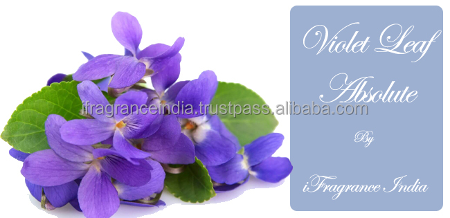 PURE VIOLET LEAF ABSOLUTE OIL