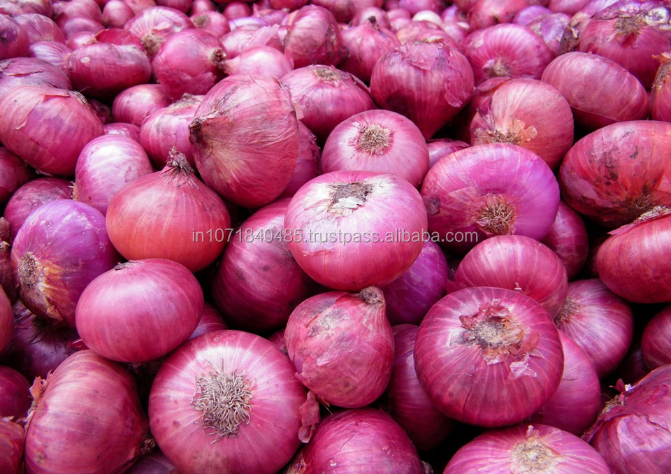 Fresh Onion Price