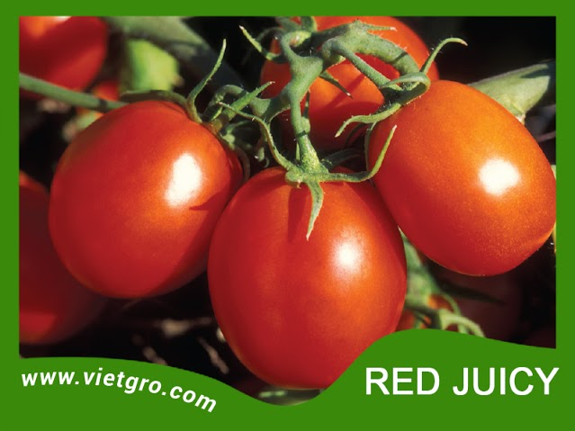 High Yield F1 Tomato Seeds - Red Juicy