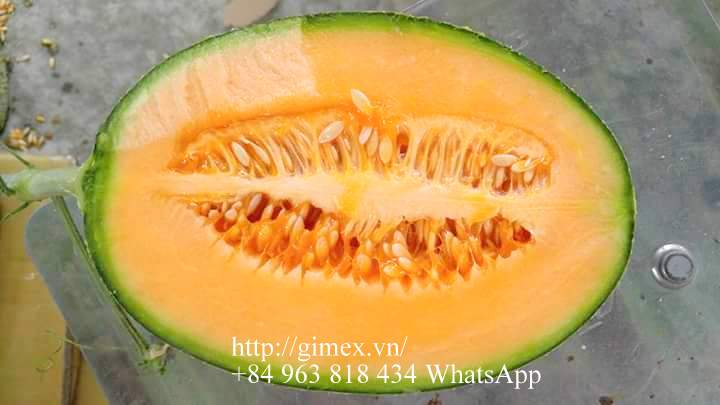VIETNAM FRESH SWEET HAMI MELON